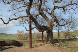 quercia delle checche pienza, le cure (9)