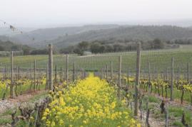 vigne san felice, colza, fave e diserbante (26)