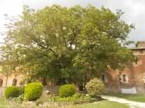 abbazia di san galgano (10)