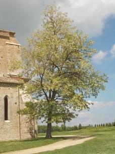 abbazia di san galgano (6)
