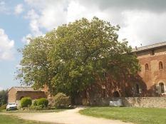 abbazia di san galgano (8)