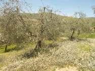 il nido di uova turchesi (1)