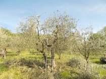 il nido di uova turchesi (10)