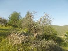 il nido di uova turchesi (11)