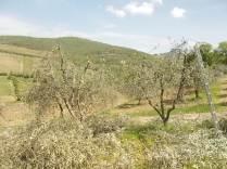 il nido di uova turchesi (12)