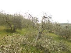 il nido di uova turchesi (13)