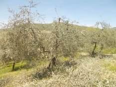 il nido di uova turchesi (2)