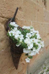 pienza e i fiori (7)