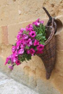 pienza e i fiori (8)