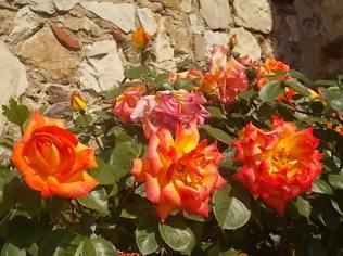 rosa arancio e giallo rietine (10)