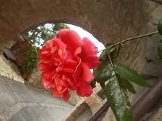 vertine arco delle rose (4)