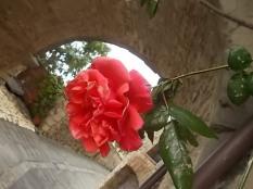 vertine arco delle rose (5)