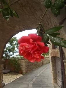 vertine arco delle rose (6)