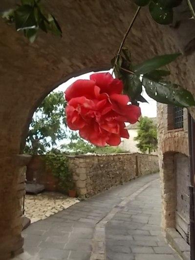 vertine arco delle rose (7)