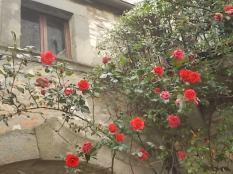 vertine arco delle rose (9)
