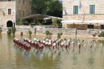 bagno vignoni e ninfee di simone lingua (5)