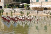 bagno vignoni e ninfee di simone lingua (6)