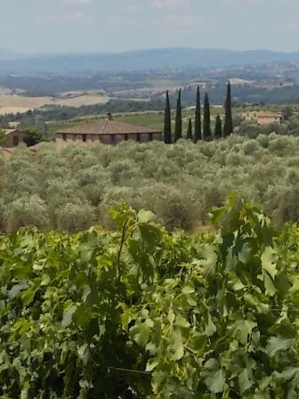 berardenga vigne estate 2018 (12)
