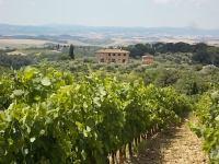 berardenga vigne estate 2018 (8)
