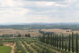 grano, berardenga e ulivi (11)