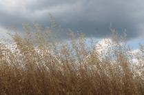 grano, berardenga e ulivi (6)