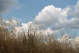 grano, berardenga e ulivi (7)