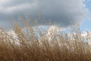 grano, berardenga e ulivi (8)