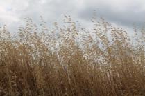 grano, berardenga e ulivi (9)