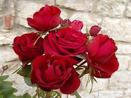 rose di vertine (11)
