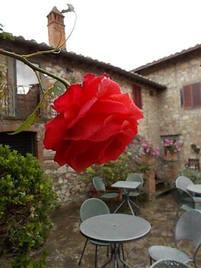 rose di vertine (5)