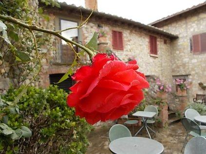 rose di vertine (6)