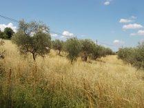 erba secca e alta berardenga (11)