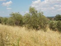 erba secca e alta berardenga (13)