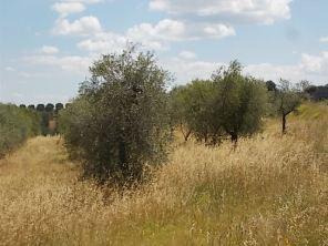 erba secca e alta berardenga (2)