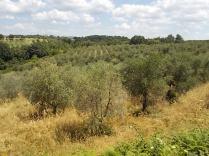 erba secca e alta berardenga (5)