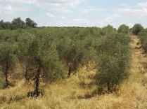 erba secca e alta berardenga (9)