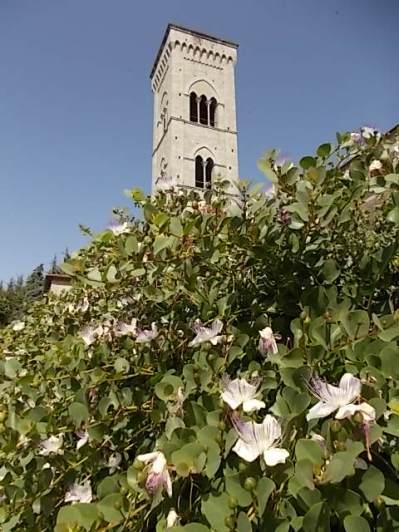 i capperi della chiesa di buca (4)