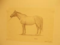 il cavallo degli artisti magazzini del sale siena (11)
