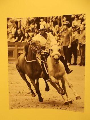il cavallo degli artisti magazzini del sale siena (15)