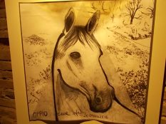 il cavallo degli artisti magazzini del sale siena (36)