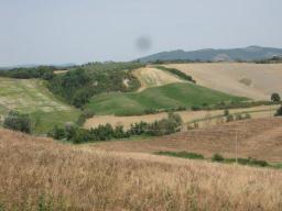 pecore-cane-pastore-e-crete-senesi-8