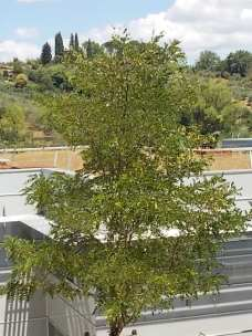 sei toscana siena e erba secca sul tett (8)