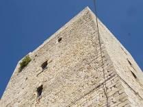 vertine fico sulla torre (1)