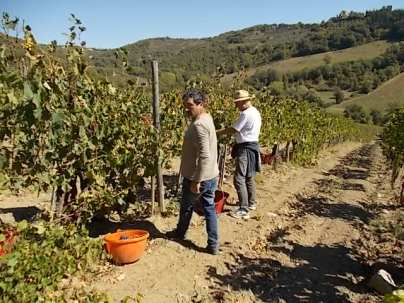 vertine vendemmia 2018 (32)