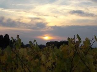autunno foglie vite rondine amata (6)