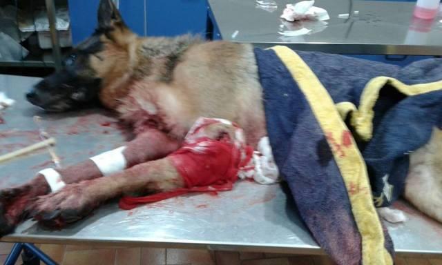 cane-ucciso-cacciatore foto da radio siena tv