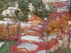 foglie rosse di vite americana e bricco dell'acqua vertine (10)