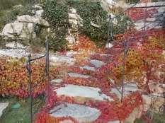 foglie rosse di vite americana e bricco dell'acqua vertine (11)