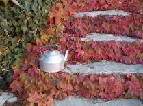 foglie rosse di vite americana e bricco dell'acqua vertine (13)