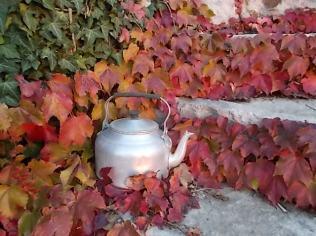 foglie rosse di vite americana e bricco dell'acqua vertine (16)